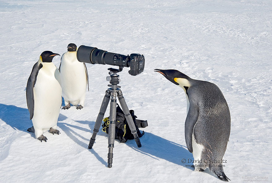 animals-with-camera-helping-photographers-5__880