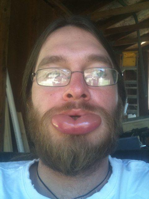 barba-labio-avispa