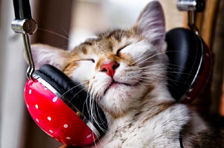 cientificos-hacen-musica-especial-para-gatos-buscando-hacerlos-sentirse-mejor