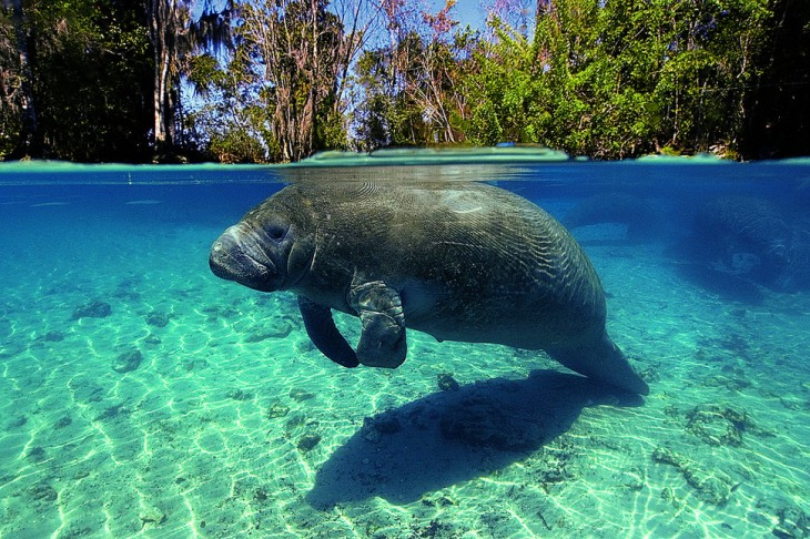 fotos-debajo-del-agua-13-730x486