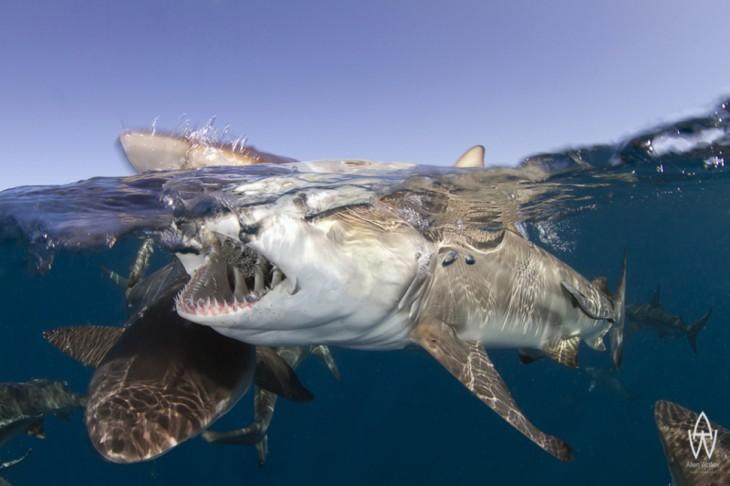 fotos-debajo-del-agua-2-730x486