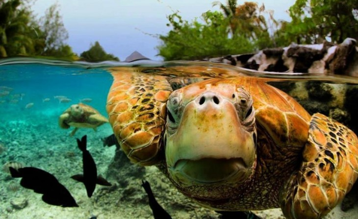 fotos-debajo-del-agua-20-730x447