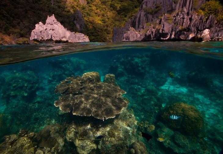 fotos-debajo-del-agua-25-730x504
