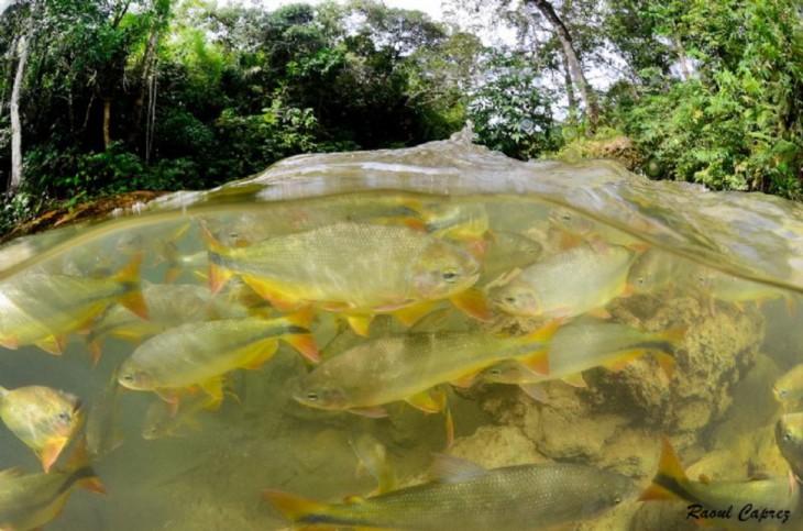 fotos-debajo-del-agua-27-730x483
