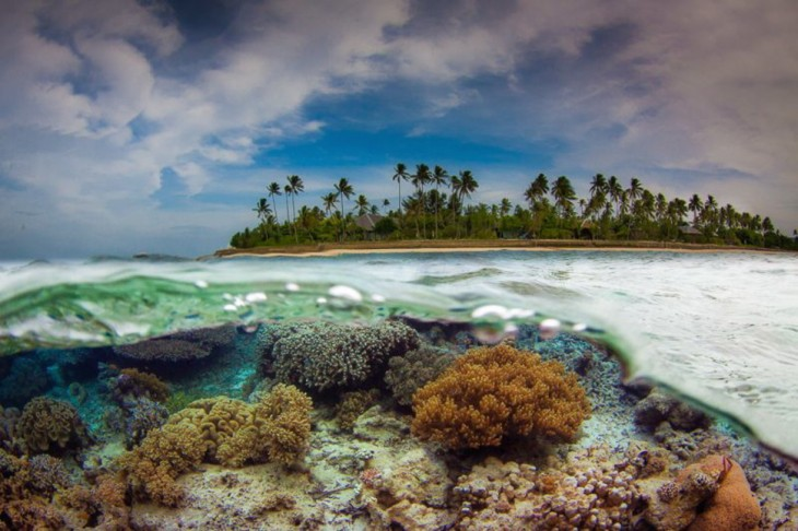 fotos-debajo-del-agua-29-730x486