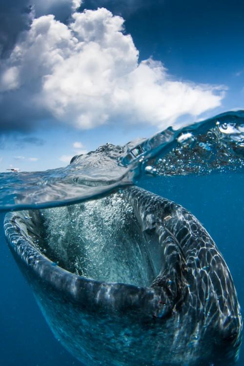 fotos-debajo-del-agua-30-500x750
