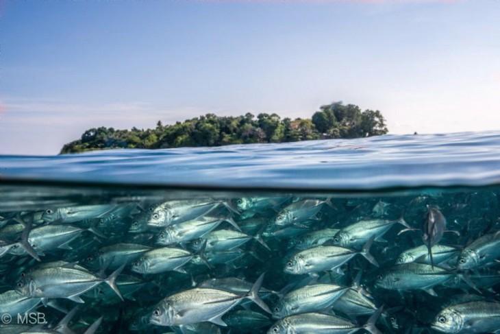 fotos-debajo-del-agua-33-730x487