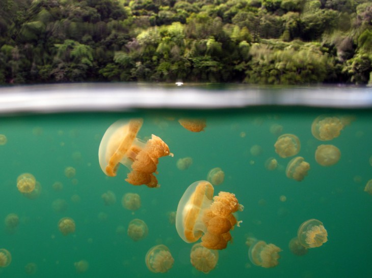 fotos-debajo-del-agua-5-730x547