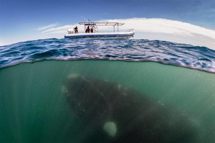 fotos-debajo-del-agua-730x486