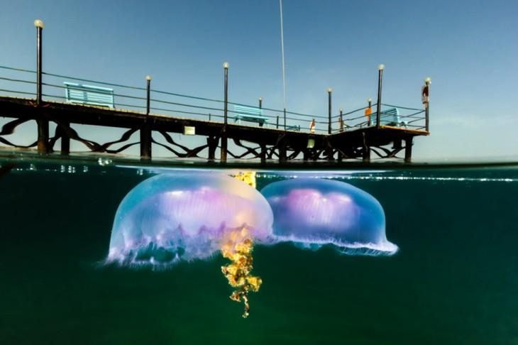 fotos-debajo-del-agua-9-730x486