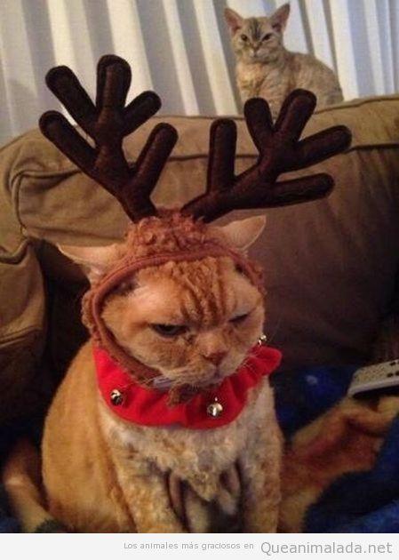 imagen-graciosa-gato-disfraz-reno-navidad