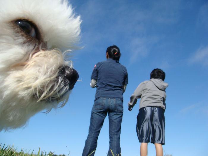 optical-illusion-giant-dog-121__700