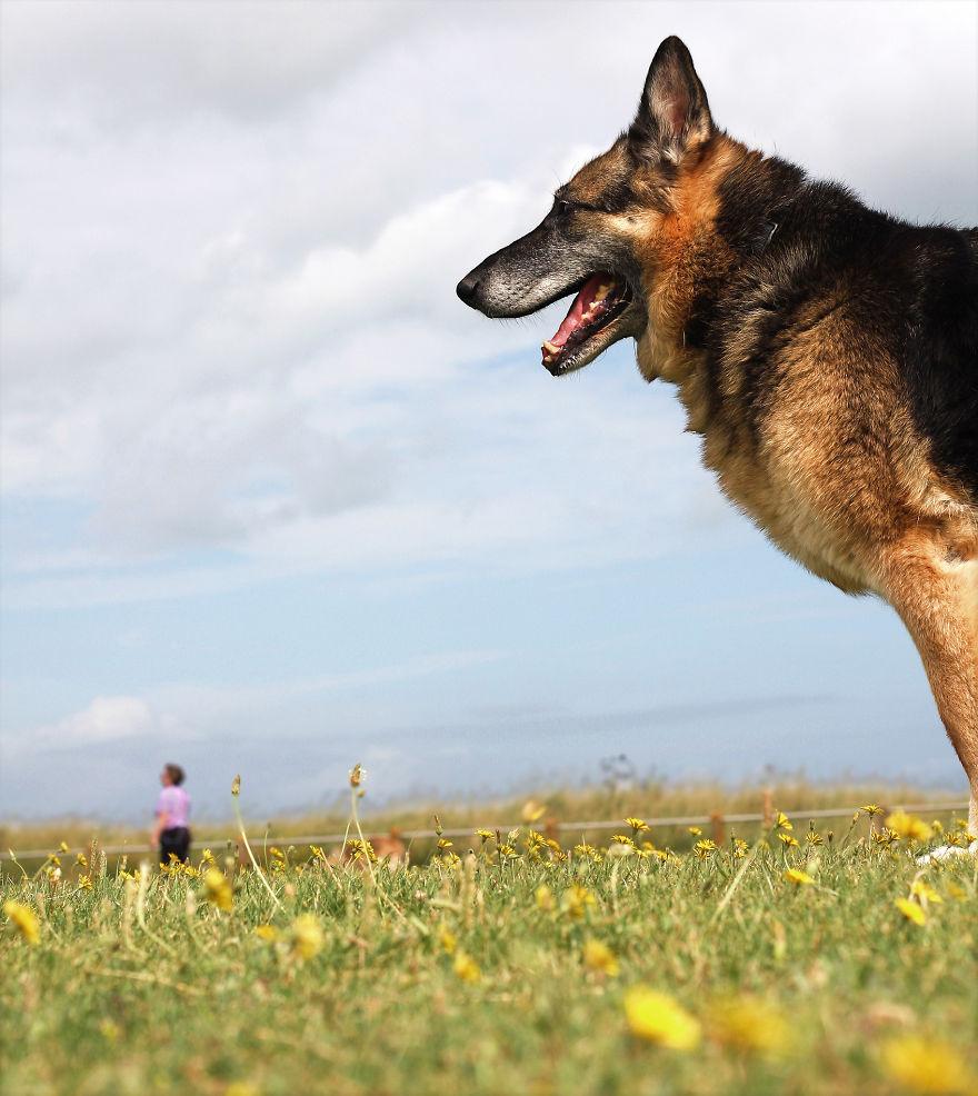 optical-illusion-giant-dog-131__880
