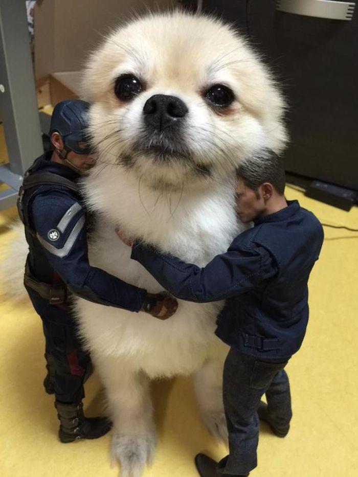 optical-illusion-giant-dog-51__700