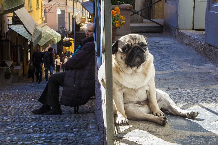 optical-illusion-giant-dog-91__700