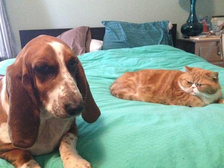 21 Razones que explican por qué sentimos amor por los gatos