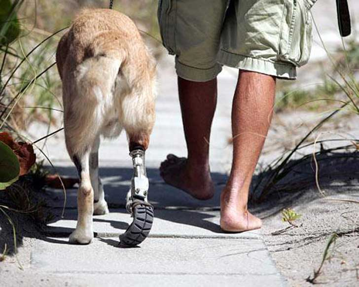 animal-prosthetics-8-1