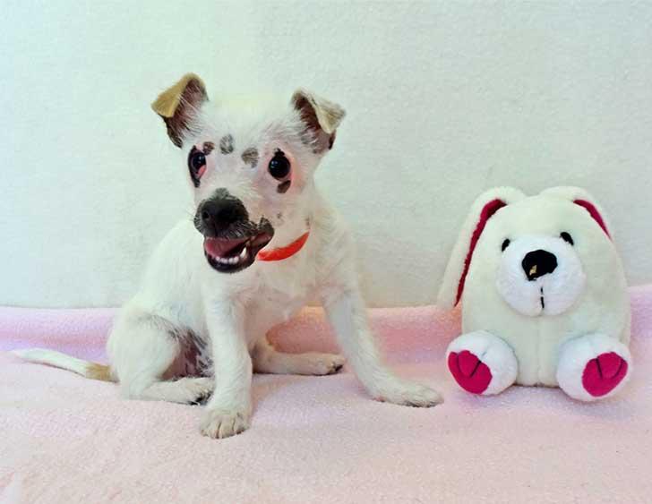 cachorro-perro-cicatrices-adoptado-hssv-christine-doblar-1