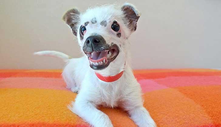 cachorro-perro-cicatrices-adoptado-hssv-christine-doblar-9