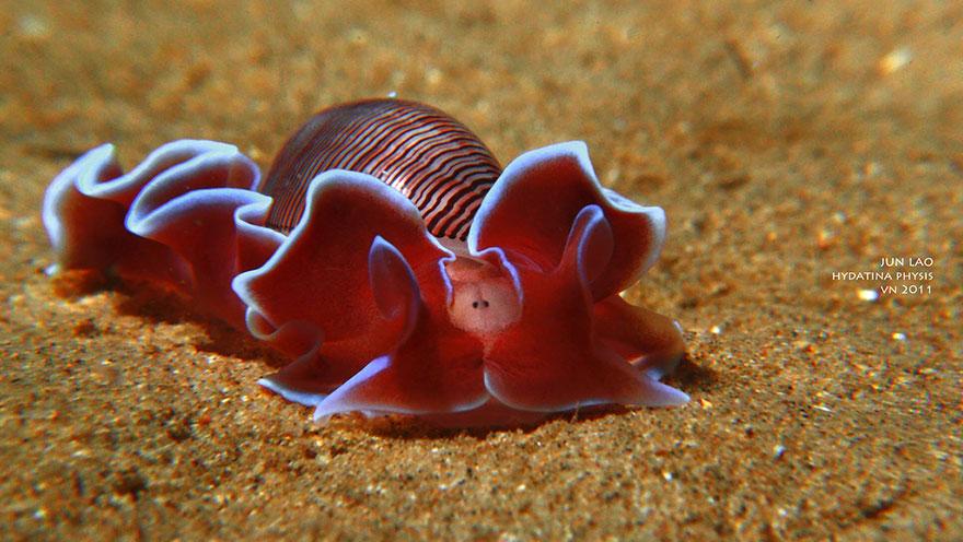 curiosas-babosas-marinas-nudibranquios-13
