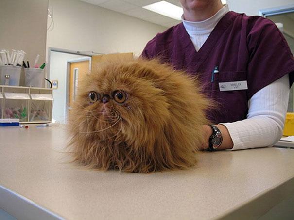 gatos-visitando-veterinario-1