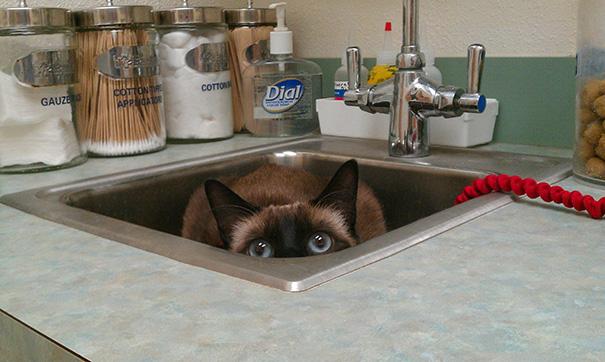 gatos-visitando-veterinario-12