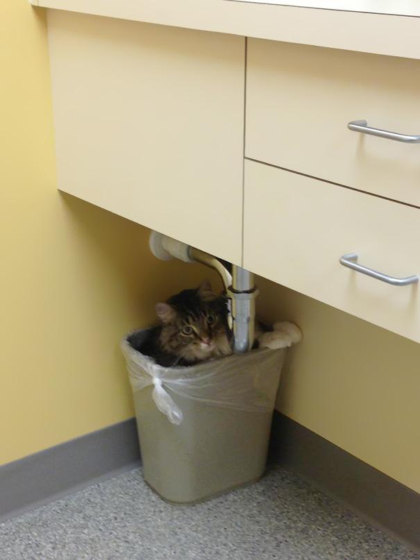 gatos-visitando-veterinario-15