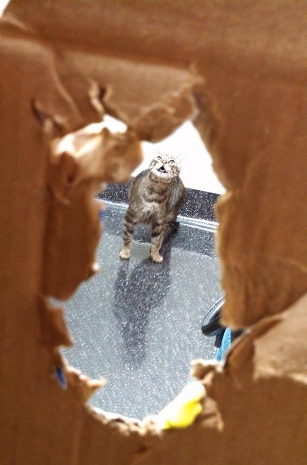 gatos-visitando-veterinario-2