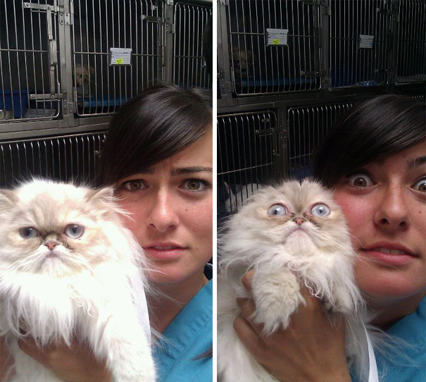 gatos-visitando-veterinario-4
