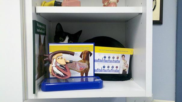 gatos-visitando-veterinario-5