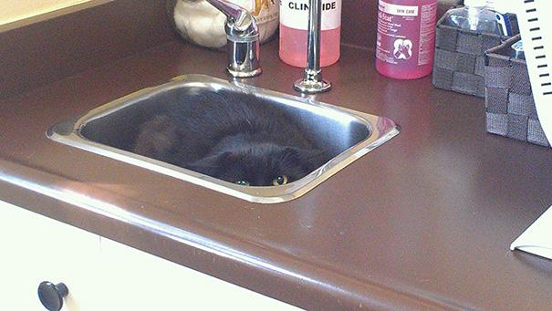 gatos-visitando-veterinario-7