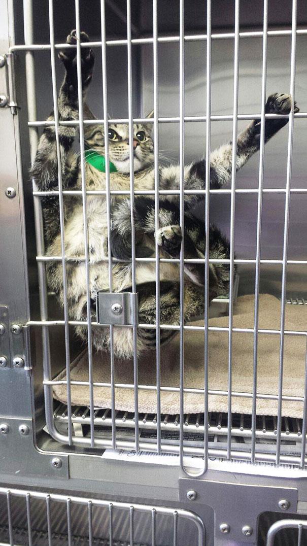 gatos-visitando-veterinario-8
