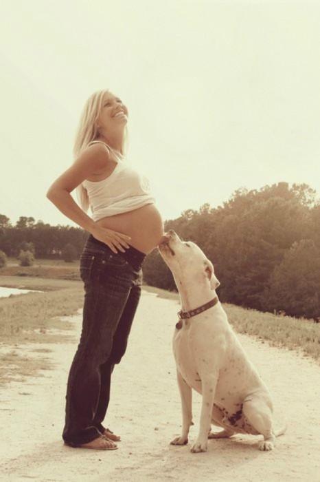 perros-y-embarazadas-14-466x700