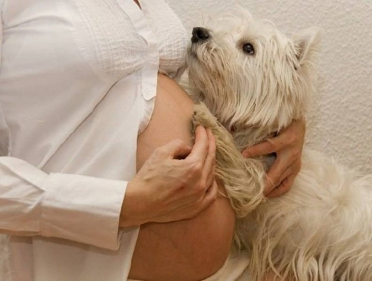 perros-y-embarazadas-17-730x552