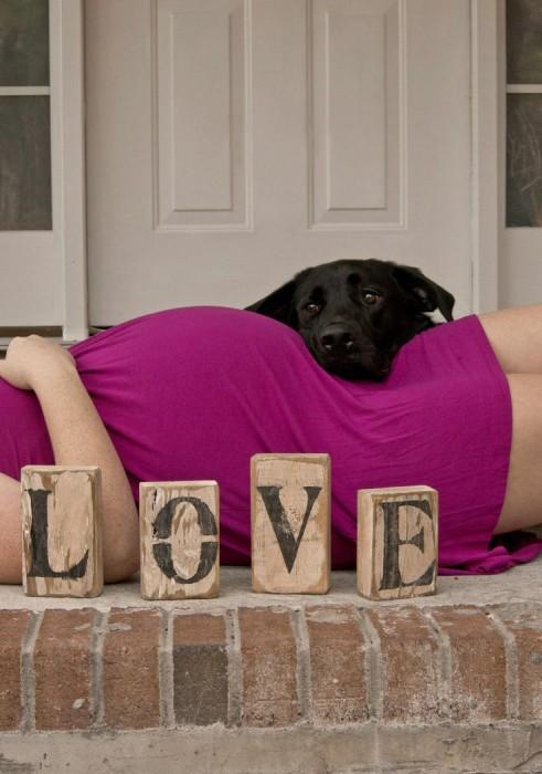 perros-y-embarazadas-25-491x700