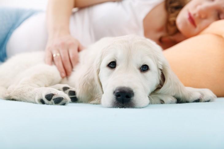 perros-y-embarazadas-31-730x487