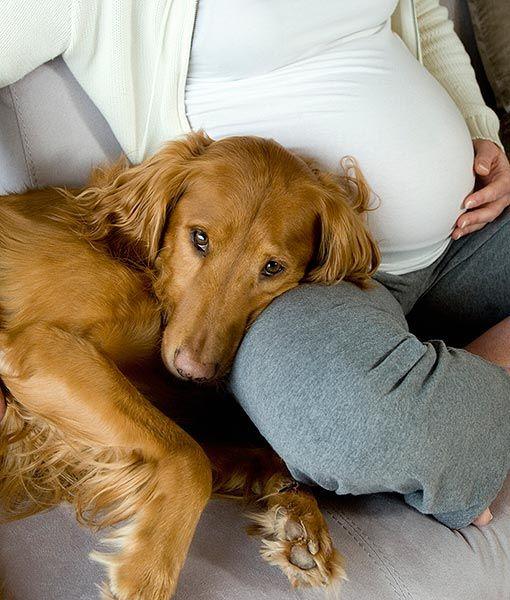 perros-y-embarazadas-5