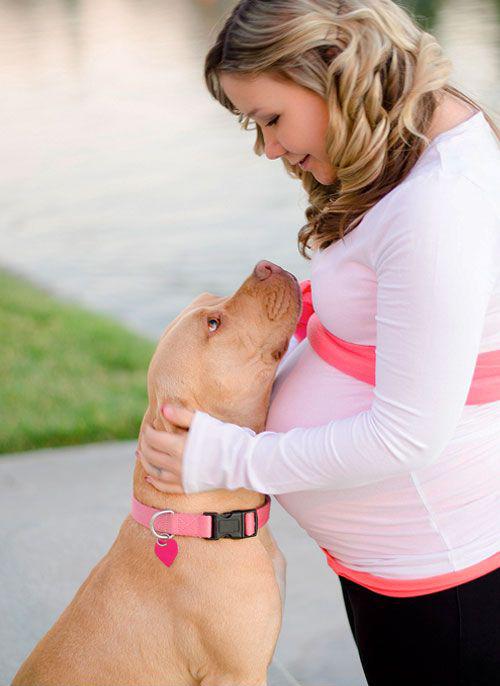 perros-y-embarazadas-7