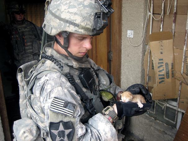 soldados-con-gatos-13