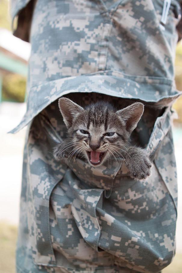 soldados-con-gatos-16