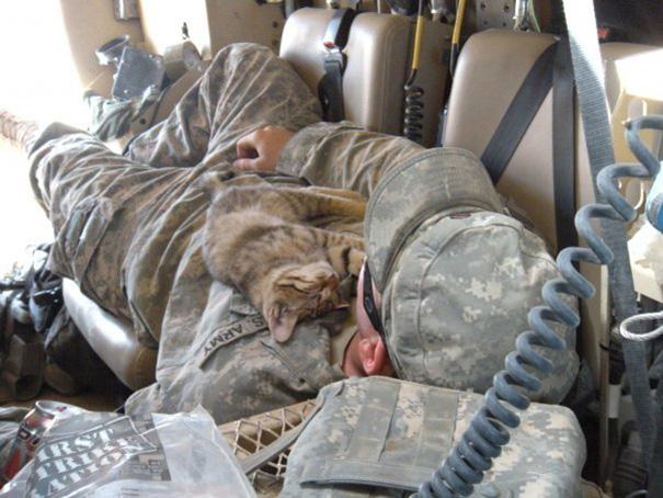 soldados-con-gatos-2