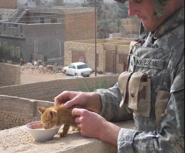 soldados-con-gatos-6