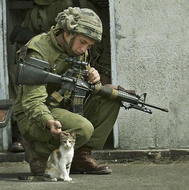 soldados-con-gatos-7