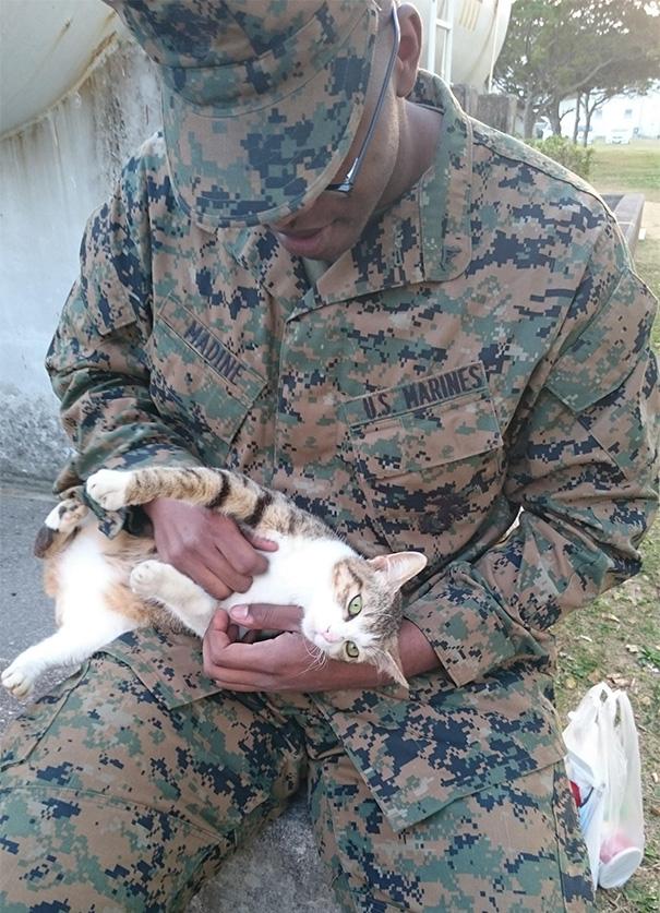 soldados-con-gatos-8