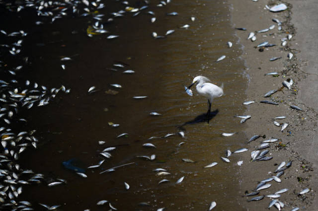 the_sad_sight_of_polluted_beaches_in_rio_de_janeiro_640_13