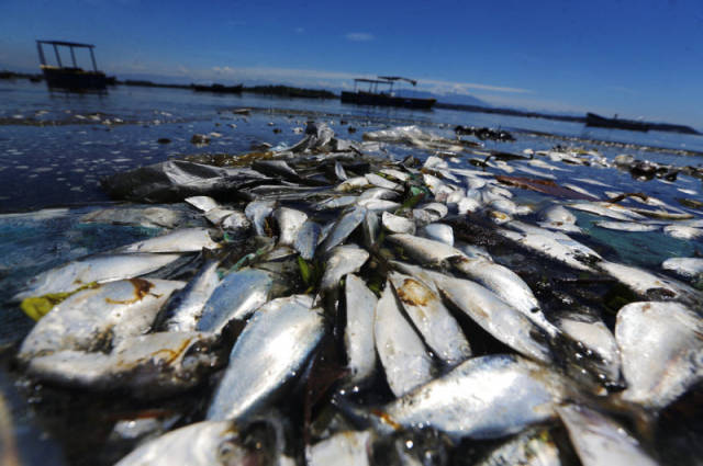 the_sad_sight_of_polluted_beaches_in_rio_de_janeiro_640_19