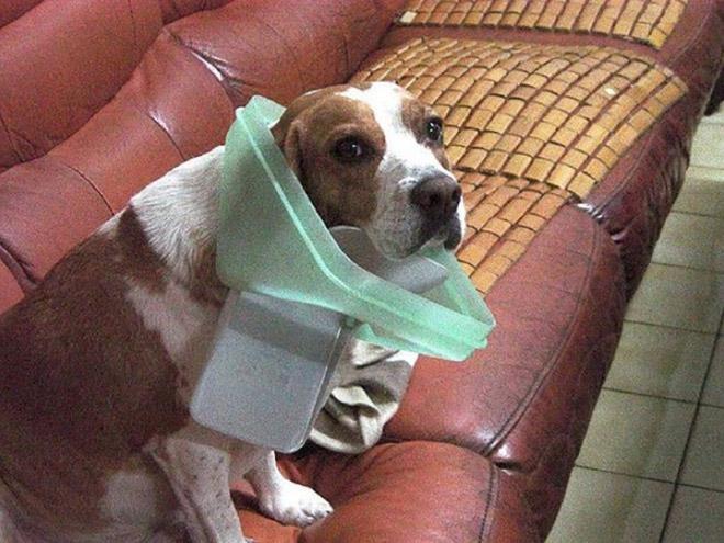 9-perros-que-no-pueden-decir-que-son-inocentes_1