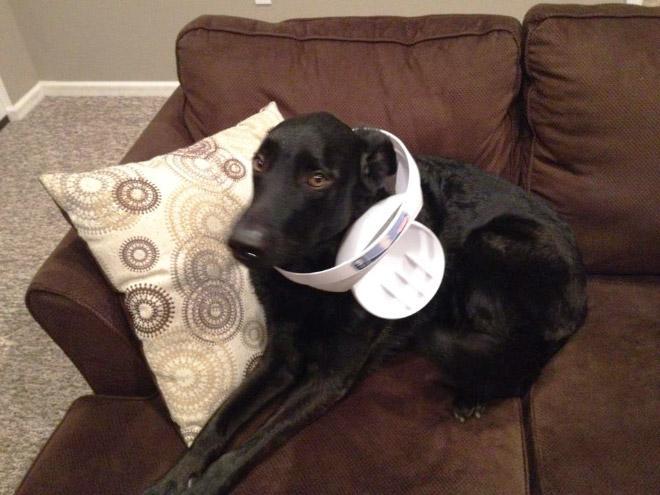 9-perros-que-no-pueden-decir-que-son-inocentes_2