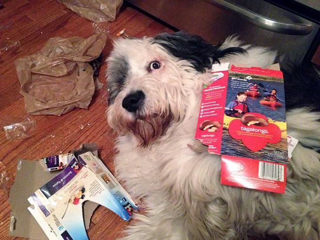 9-perros-que-no-pueden-decir-que-son-inocentes_3