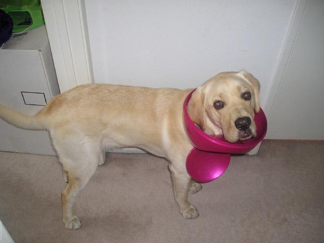 9-perros-que-no-pueden-decir-que-son-inocentes_4